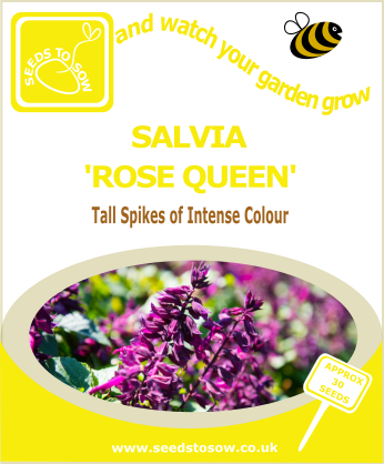Salvia - Rose Queen - Seeds to Sow Limited