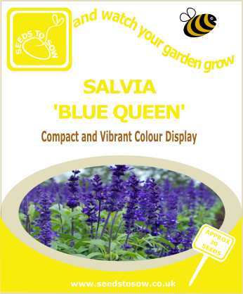 Salvia - Blue Queen - Seeds to Sow Limited