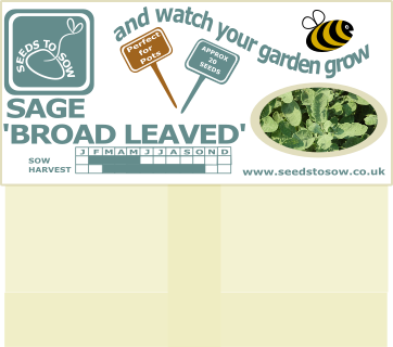 Sage - Broad Leaved - Seeds to Sow Limited