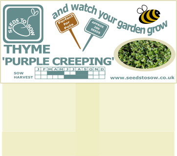Thyme - Purple Creeping - Seeds to Sow Limited