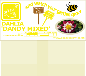 Dahlia - Dandy Mixed - Seeds to Sow Limited