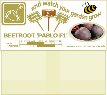 Beetroot Pablo F1 - Seeds to Sow Limited