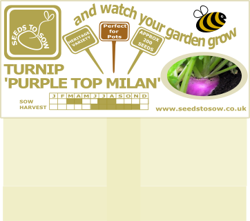 Turnip Purple Top Milan - Seeds to Sow Limited