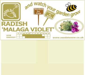 Radish Malaga Violet - Seeds to Sow Limited