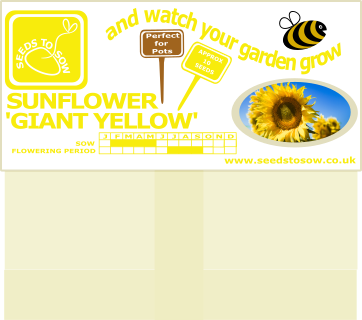 Sunflower - Giant Yellow Single - Seeds to Sow Limited