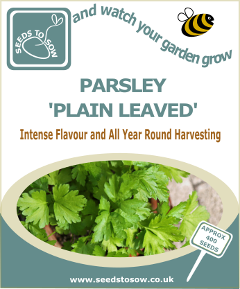 Parsley Plain Leaved - Seeds to Sow Limited