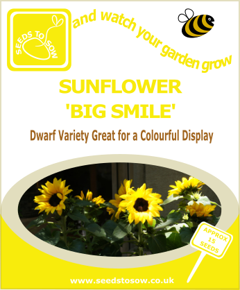 Sunflower - Big Smile - Seeds to Sow Limited