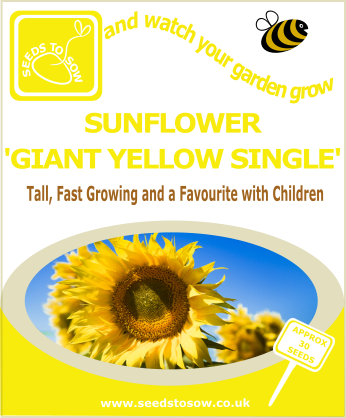 Sunflower - Giant Yellow Single