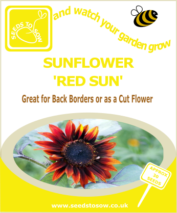 Sunflower - Red Sun - Seeds to Sow Limited