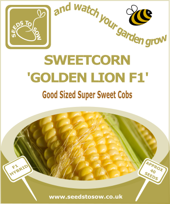 Sweetcorn Golden Lion F1 - Seeds to Sow Limited