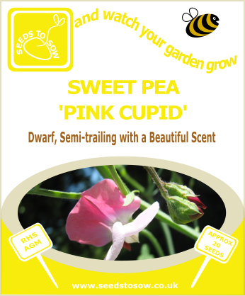 Sweet Pea - Pink Cupid - Seeds to Sow Limited