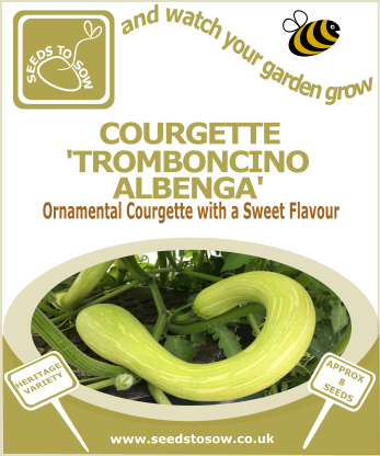 Courgette Tromboncino Albenga - Seeds to Sow Limited