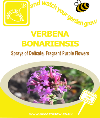 Verbena bonariensis - Seeds to Sow Limited