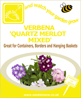 Verbena - Quartz Merlot Mixed - Seeds to Sow Limited