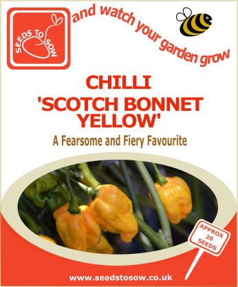 Chilli Yellow Scotch Bonnet