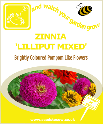 Zinnia - Lilliput Mixed - Seeds to Sow Limited