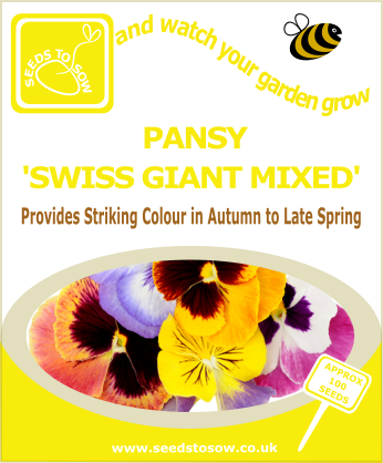 Pansy - Swiss Giant Mixed - Seeds to Sow Limited
