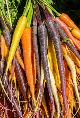 20 x Birthday Favour - Rainbow Carrot Seeds - Seeds to Sow Limited