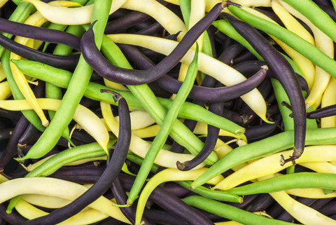 French Bean Dwarf Rainbow Mix - Seeds to Sow Limited