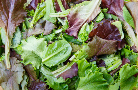 Lettuce Mixed - Seeds to Sow Limited
