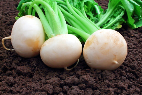 Radish White Beauty - Seeds to Sow Limited