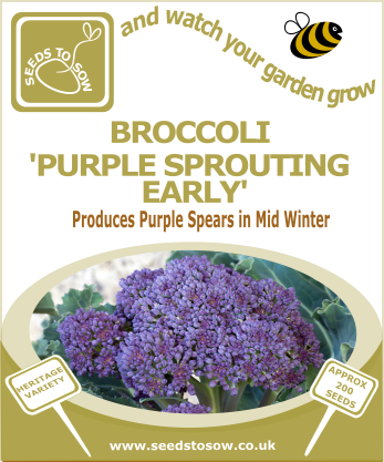 Broccoli Purple Sprouting Early - Seeds to Sow Limited