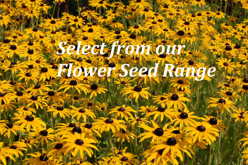 Select from Our Flower Seeds