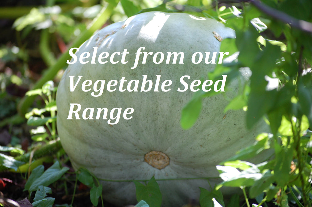 Browse our Vegetable Seed collection