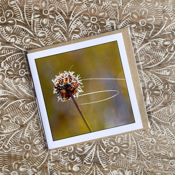 Green Buttongrass Greeting Card Myrtle & Me Tasmanian Nature Photography