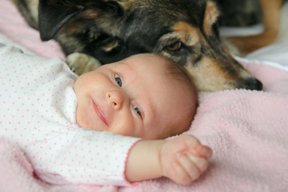 What New Moms Need to Know About Dogs and Kids