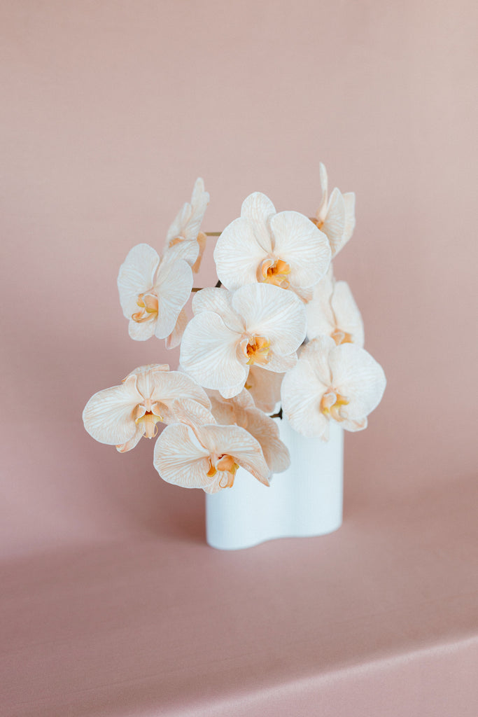 Orchid in Ribbed Infinity Vase
