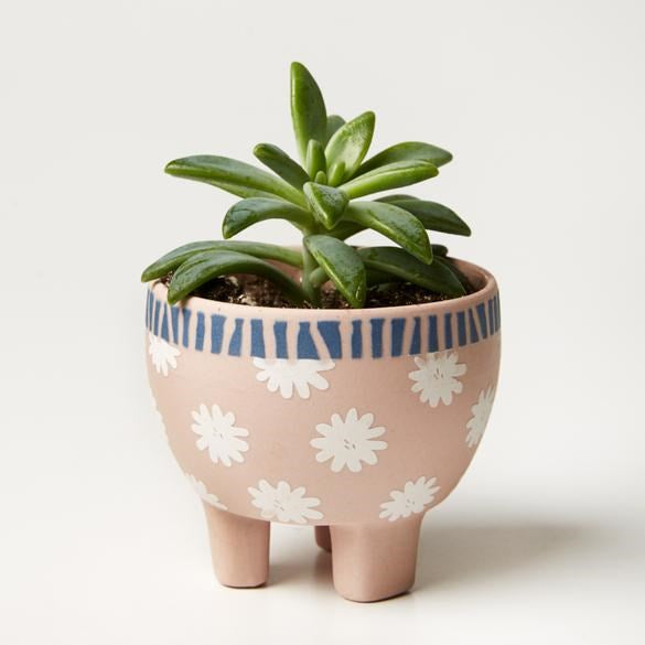 Paper Cut Planter Pink Star