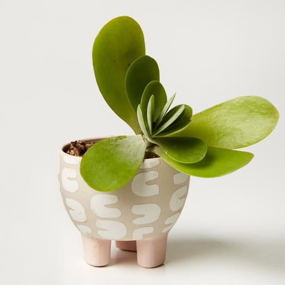 Paper Cut Planter White Curve