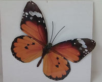 Butterfly Metal Wall Ornament Medium