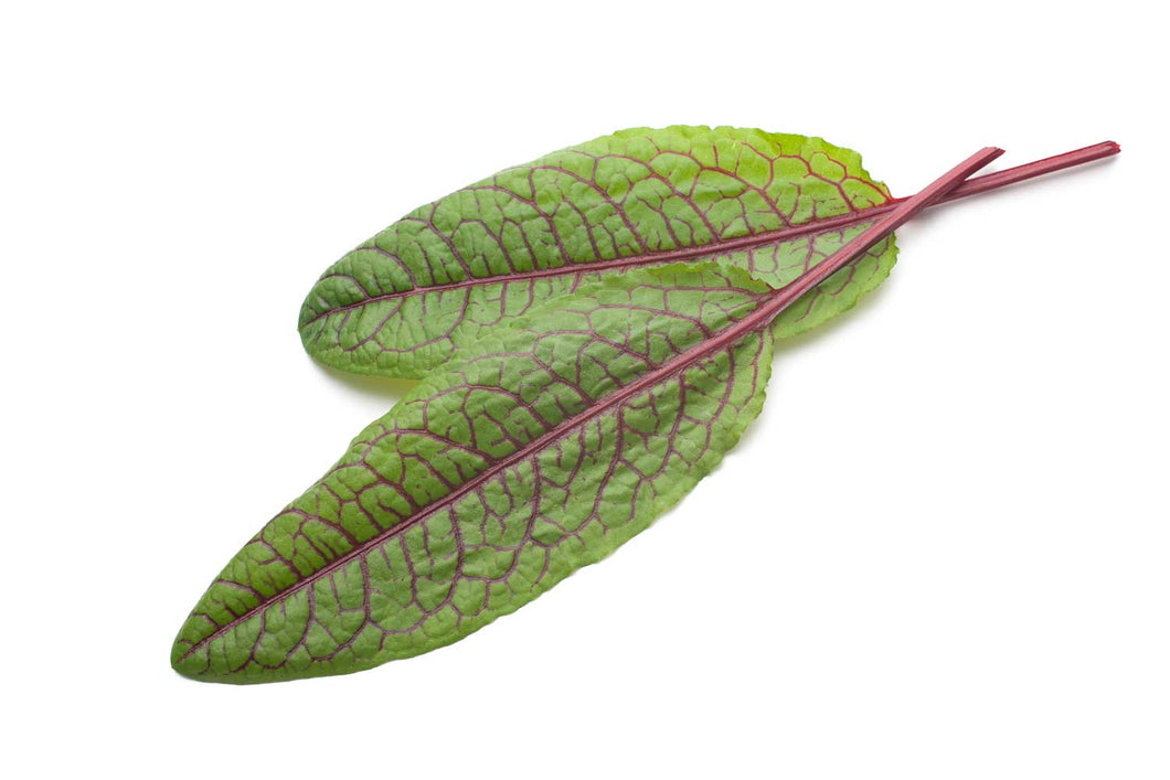 Red veined sorrel - Rumex sanguineus
