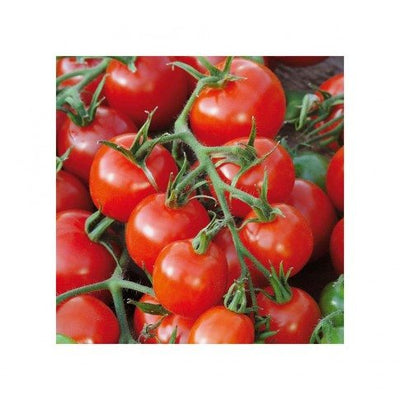 Determinate Bush Tomatoes - Solanum lycopersicum Subscription