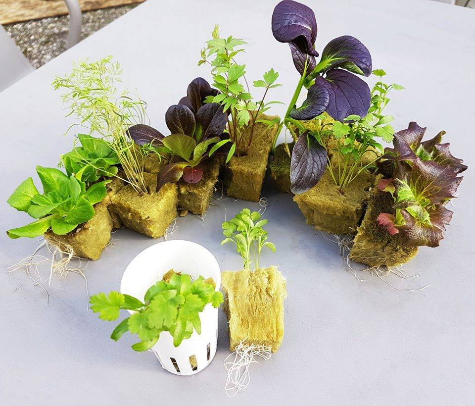 products/Myfood_Seedlings.jpg