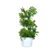 Load image into Gallery viewer, Aerospring Garden Standard - 9 sections, 27 plants