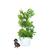 The Aerospring Garden Standard <em><br> 9 sections, 27 plants</em>