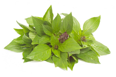 Basil - Ocimum basilicum Subscription