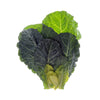 Collard Greens - Brassica olaracea Subscription