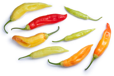 Chillies & Bell Peppers - Capsicum anuum