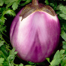 Load image into Gallery viewer, Eggplant - Solanum melongena