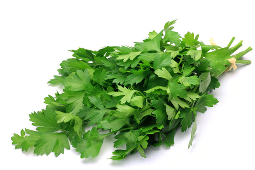 Italian Parsley - Petroselinum Crispum