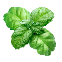 Load image into Gallery viewer, Basil - Ocimum basilicum