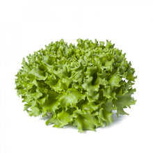 Load image into Gallery viewer, PELLETED SEEDS - Lettuce