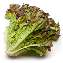 Load image into Gallery viewer, Lettuce - Lactuca Sativa L.