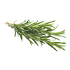 Rosemary - Rosmarinus officinalis Subscription