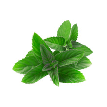 Load image into Gallery viewer, Mint - Mentha