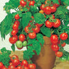 Determinate Bush Tomatoes - Solanum lycopersicum